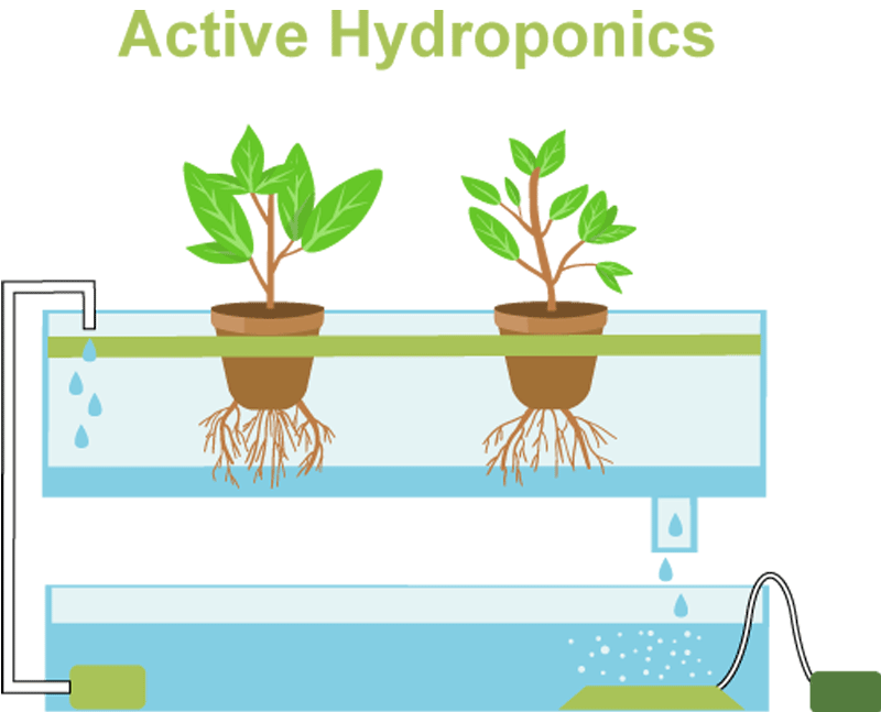 Active hydroponics