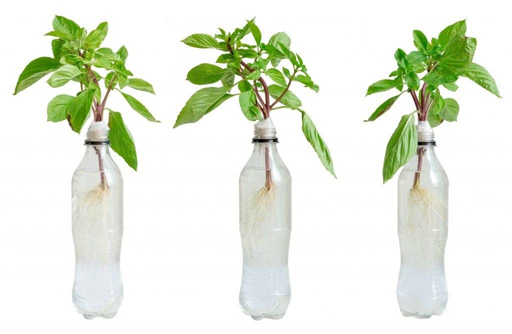 Kratky method in plastic bottles