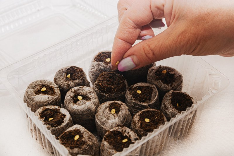 Seeds in Peat Moss