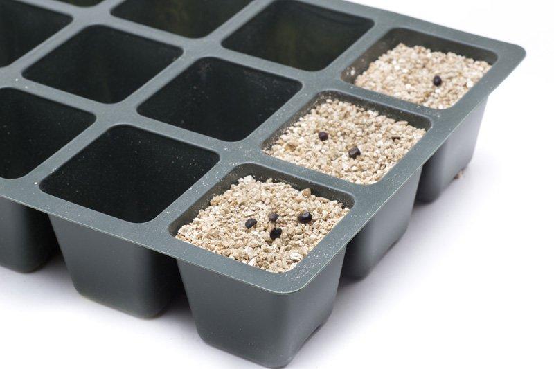 Seeds in vermiculite