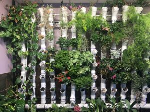 Vertical PVC pipes hydroponic system