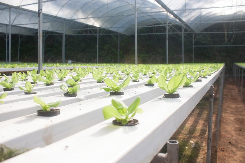 PVC Post sleeve hydroponic system