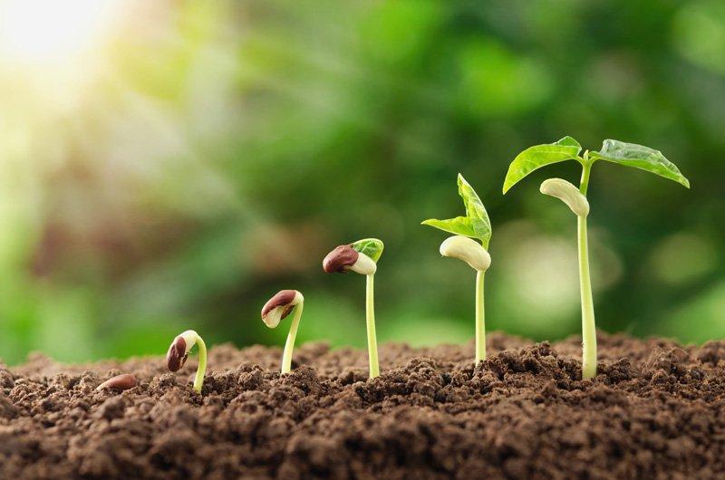 Seed Evolution