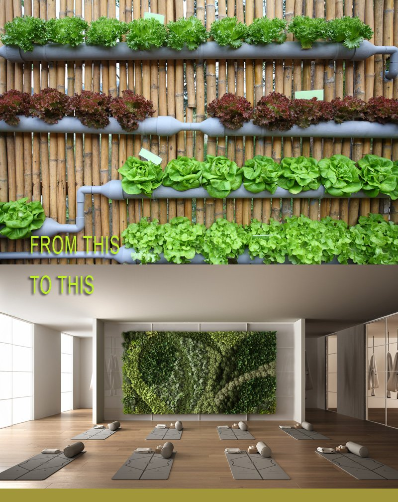 Large hydroponic wall comparison
