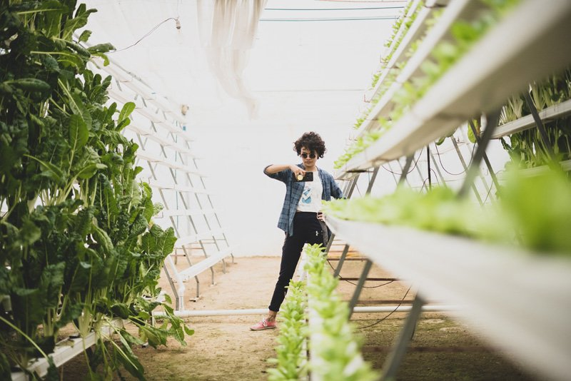 cons of hydroponics