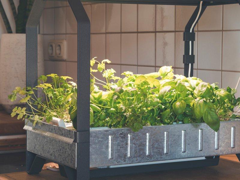 countertop herb garden