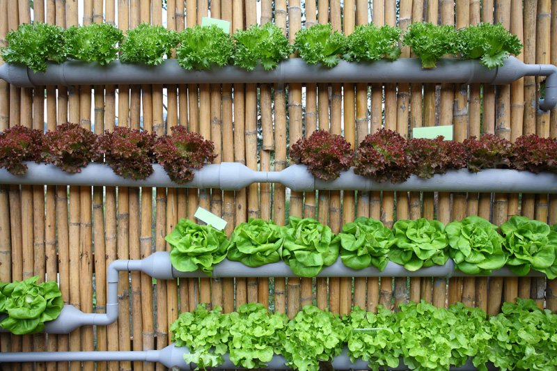 Wall hanging hydroponic system