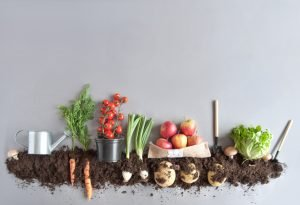 Organic fruits and vegetables growing in compost