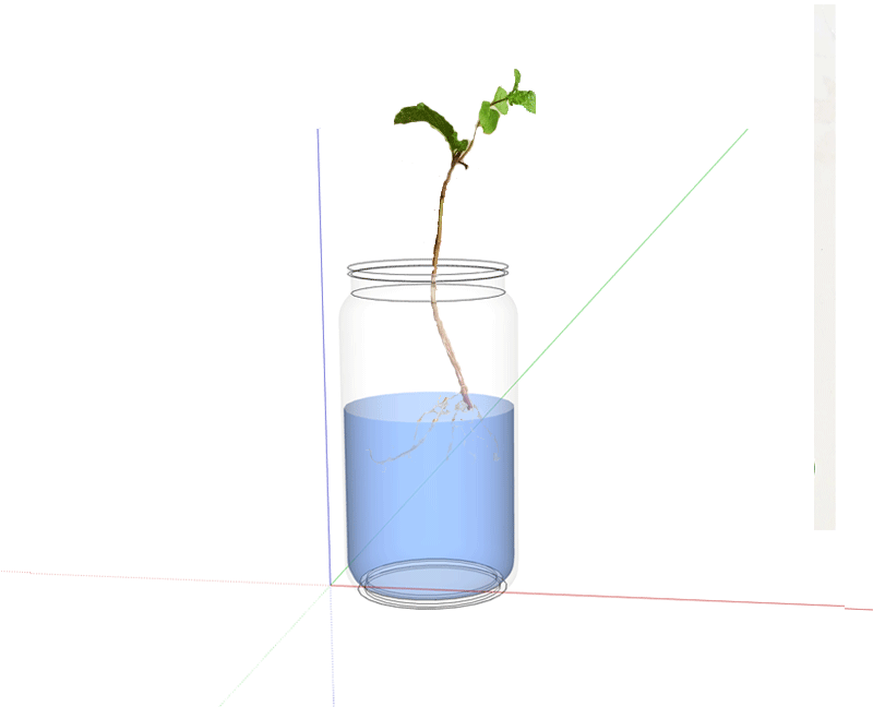 Mason-jar-with-Mint