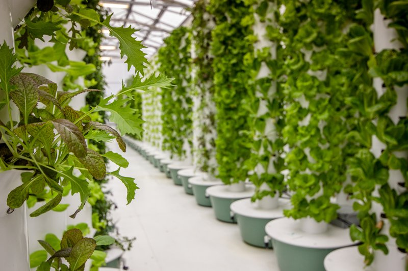 Vertical-hydroponics-tower
