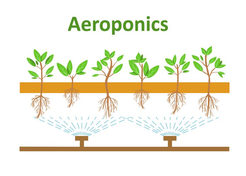 Aeroponics-Diagram