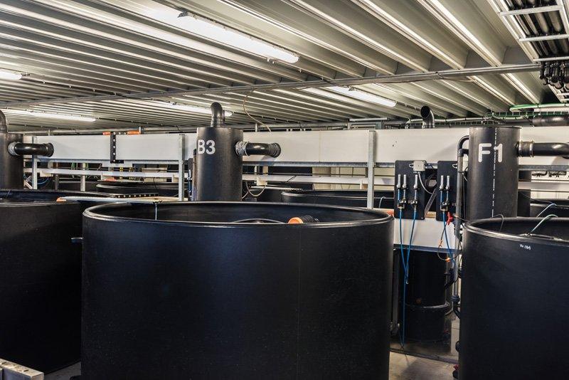 Commercial aquaponic tanks