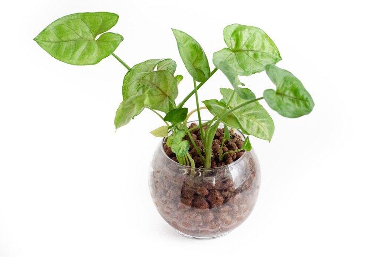 Hydroculture vase