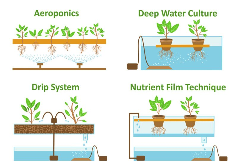 Which system for your Hydroponic garden