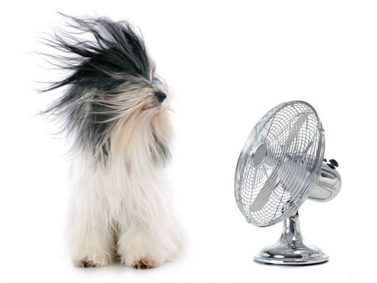 Noisy Fan